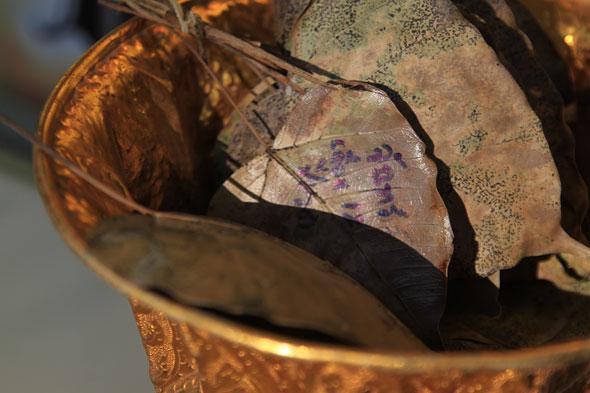Ton Pho Si Maha Pho: The Oldest Buddha Tree in Thailand