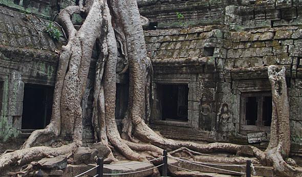 Siem Reap: Ta Prohm