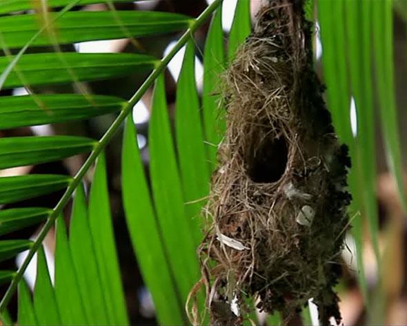 Sunbird nest