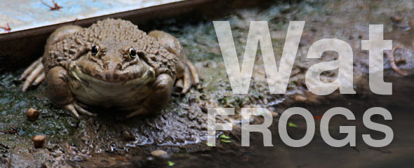 Wat Frogs