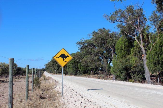 kangaroo street in Australia